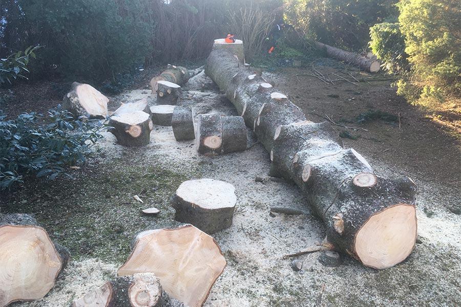 Baumfällarbeiten mit Mathias Kutter Gartengestaltung Zaunbau