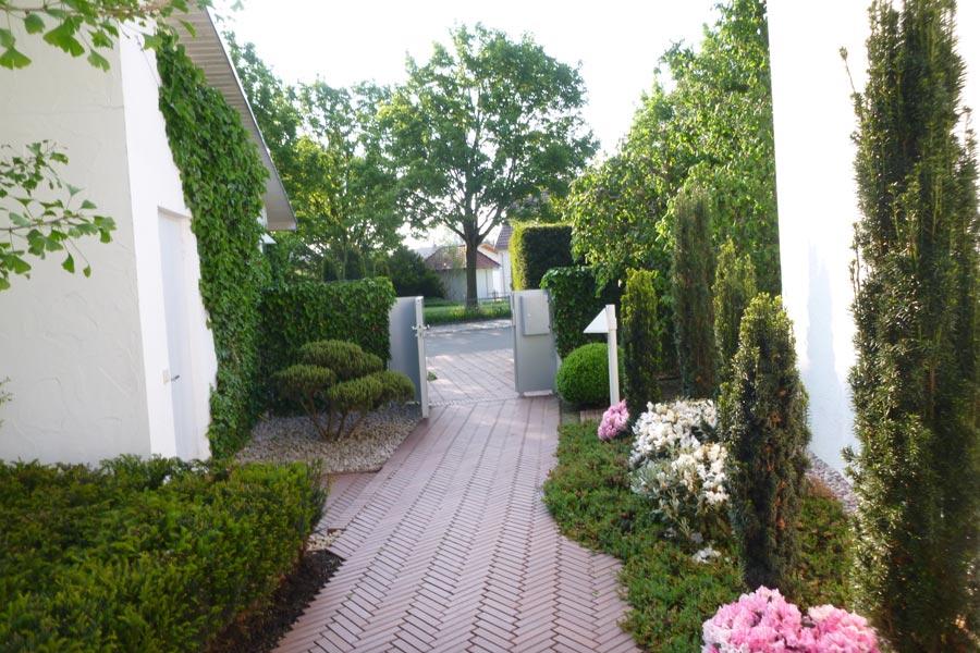 Pflanzarbeiten von Mathias Kutter Gartengestaltung